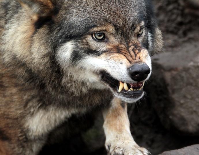 Охота, охотник, сезон, животные, дичь, Россия