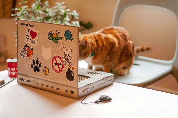 В Великобритании выпустили «ноутбук» для котов