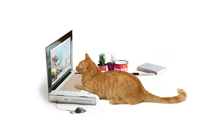 MANDATORY CREDIT: Suck UK/REX Shutterstock. Only for use in this story. Editorial Use Only. No stock, books, advertising or merchandising without photographer's permission Mandatory Credit: Photo by Suck UK/REX Shutterstock (4962549d) The cat scratch laptop stops the furry friends scratching or sitting on its owner's laptop Cat scratch laptop, Britain - Aug 2015 FULL COPY: http://www.rexfeatures.com/nanolink/qtb3 A company has created a toy laptop for cats to scratch to their heart's content. The firm behind the quirky invention are Suck UK and they are selling the 'cattop' for £20. As many feline owners are aware, cats have a habit of walking all over a laptop and ruining work, emails and google searches. The cat laptop is made mainly out of cardboard, and features a toy furry mouse and a scratchy keyboard, which aims to also deter cats from ruining home furniture.