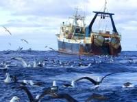 Союз РФ и Канады ради моратория на вылов рыбы в Арктике