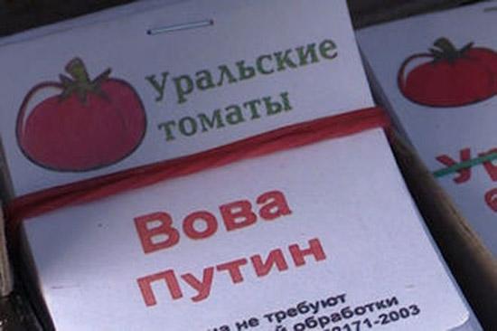 В России вывели сорт помидоров «Вова Путин»