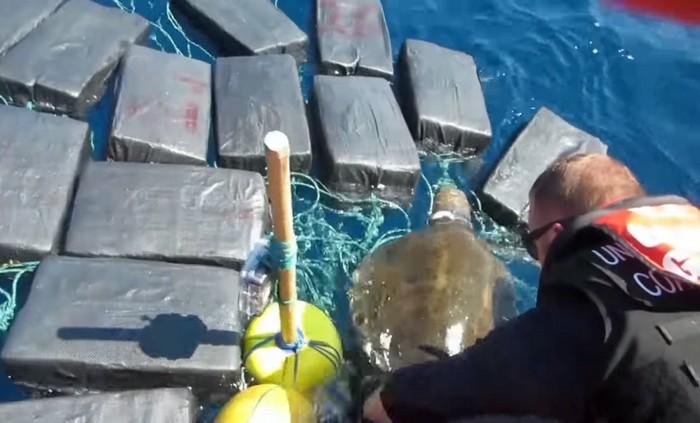 Моряки спасли черепаху, застрявшую в тюках с кокаином