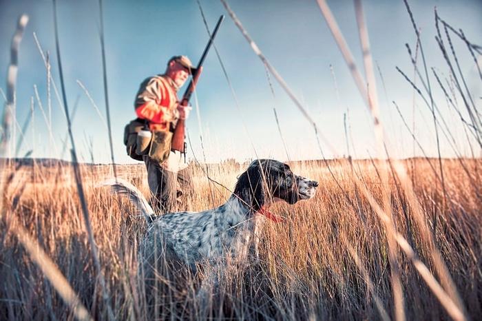 Сезон охоты 2020-2021 в Украине. Когда открытие, закрытие, лимиты, календарь на утку, кабана животных