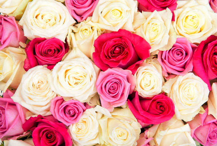 Виды роз и их выращивание в саду: что необходимо знать