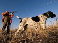 Сезон охоты 2021-2022 в Украине. Когда открытие, закрытие, лимиты, календарь на утку, кабана и других животных