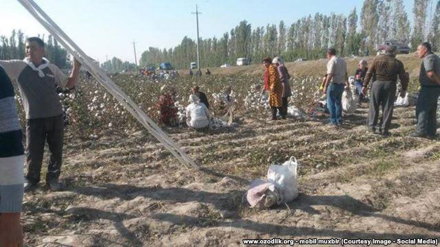 Узбеков заставили клеить на поле хлопок из-за приезда премьера