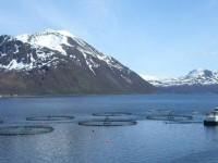 В планах Mitsubishi поглощение производителя лосося Cermaq из Норвегии