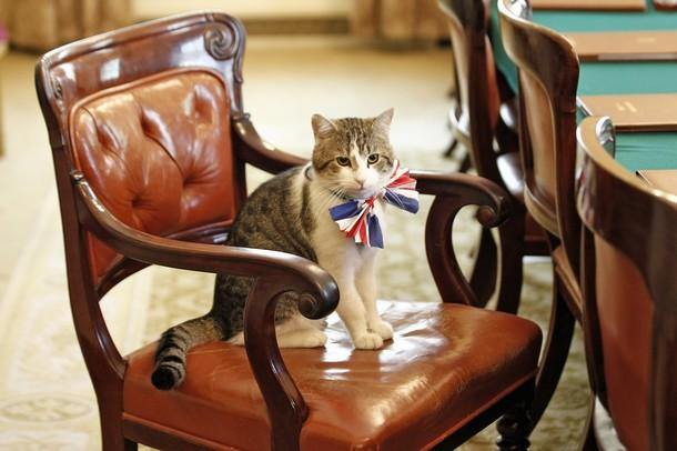 Кот Дэвида Кэмерона останется работать в резиденции премьера Британии
