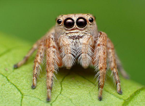 Аппетиты пауков в разы превосходит человеческие, - ученые