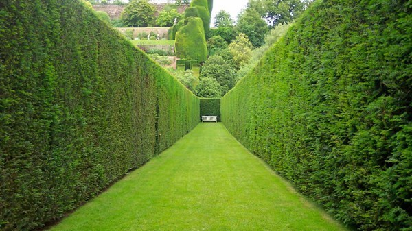 Бизнес идея: посадка живой изгороди