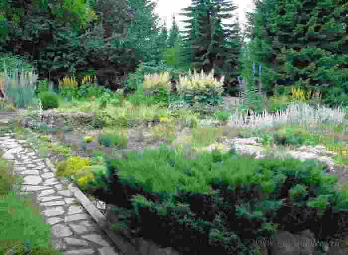 Бизнес идея: продажа декоративных растений для сада