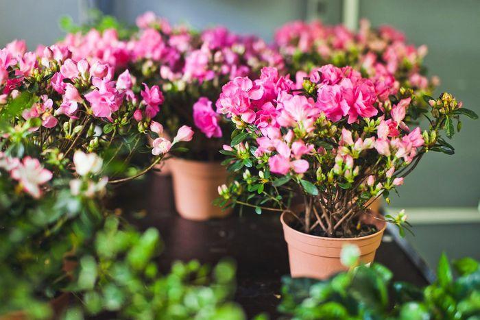 Бизнес идеи растения бизнес идеи в башкирии