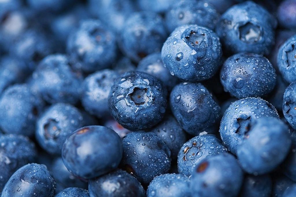 голубика фото фотография голубики лохина blueberry