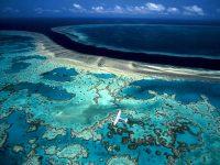 Большой Барьерный риф может окончательно обесцветиться, – ученые