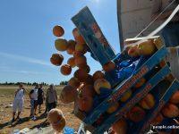 В России за год уничтожили 7500 тонн продуктов
