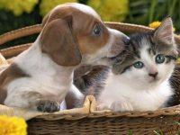 Депутаты могут заставить украинцев платить за регистрацию домашних животных