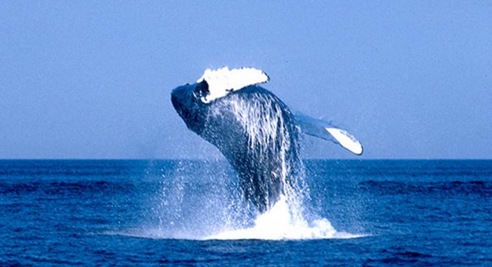 ЕС требует от Норвегии прекратить китобойный бизнес