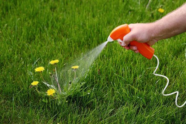 Бизнес идея: продажа гербицидов для защиты растений