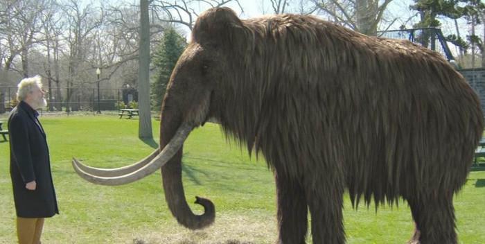 Гибрид мамонта и слона может быть создан в течение двух лет