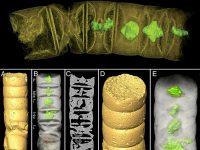 Исследователи обнаружили самые древние водоросли