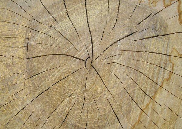 Как уменьшить растрескивание древесины?