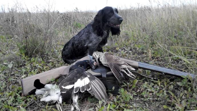 Пернатые, охота, охотник, лицензия, срок
