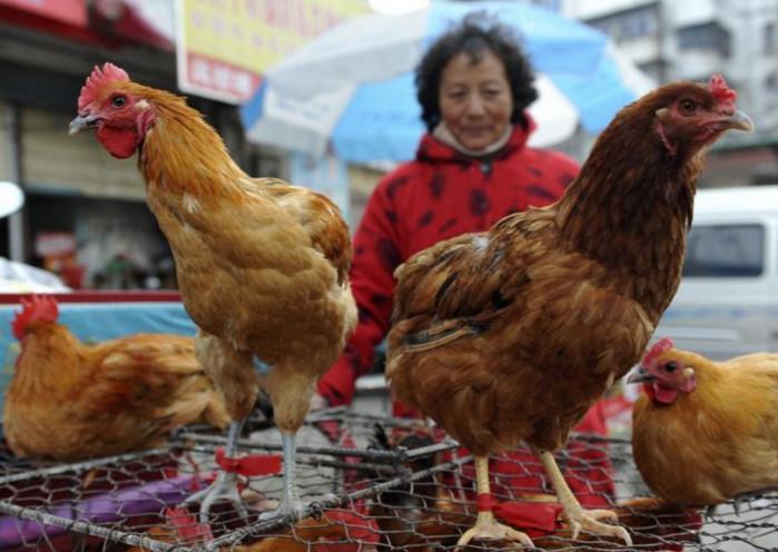 Китай начинает клинические испытания вакцины от птичьего гриппа