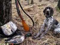 Когда открываетсяосенний сезон охоты на пернатых в Беларуси по Указу №112 (видео)