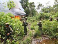 Колумбия: жители, уничтожившие посадки коки, будут получать $350 в месяц