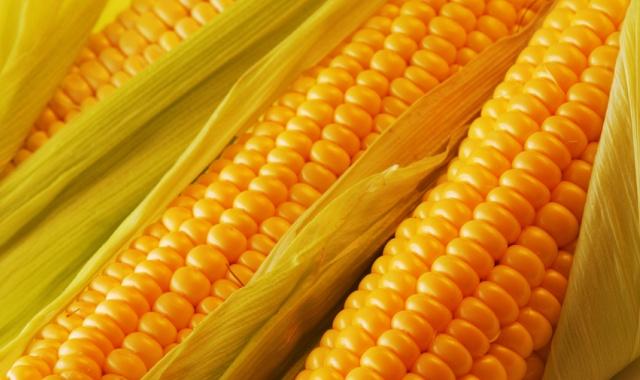 Бизнес-идея: продажа горячей кукурузы