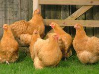 Зеркальные санкции: Белоруссия запретила поставлять в Россию животноводческую продукцию