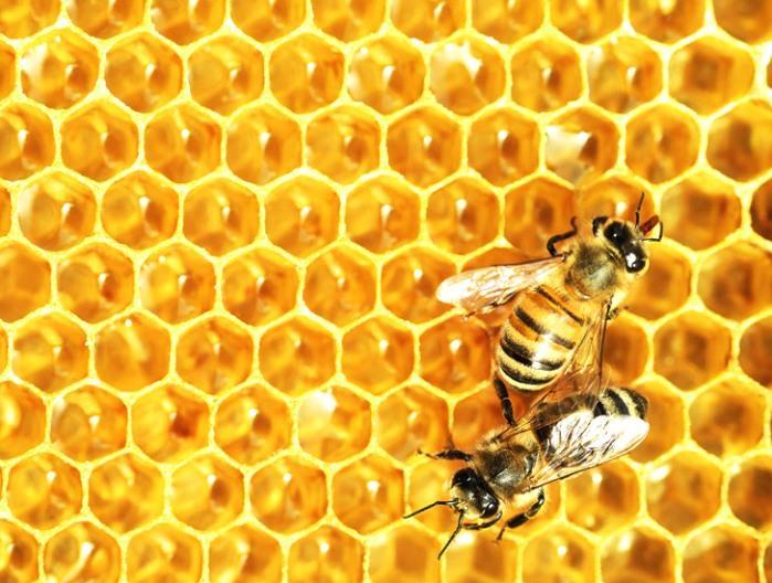 Зачем России заграничные сладости и кондитерские изделия, когда есть отечественный мёд