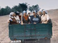 Молдавские фермеры спели бессмертный хит группы Queen для рекламы собственной продукции (видео)