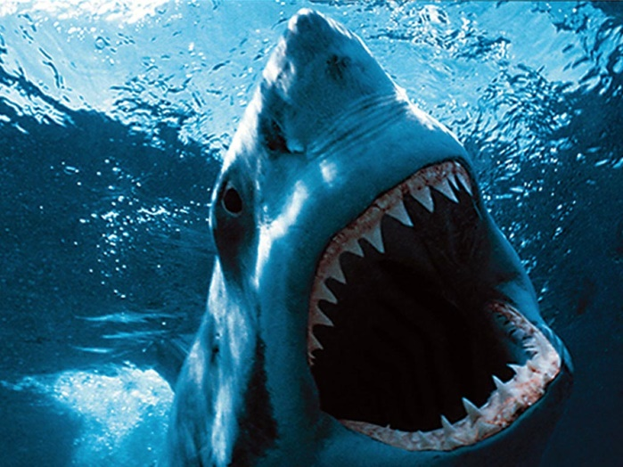 На Багамах ребенок чудом спасся от четырех акул