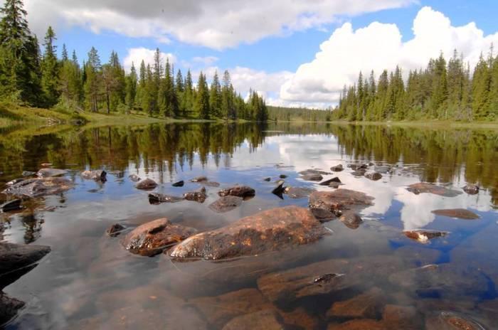 На планете Земля резко исчезает дикая природа, - WWF