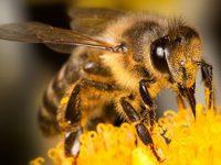 Найдены доказательства массового вымирания пчел и птиц
