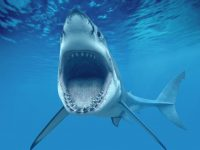 Нападение акул на мигрантов:погиб 31 человек, 40 пропали без вести