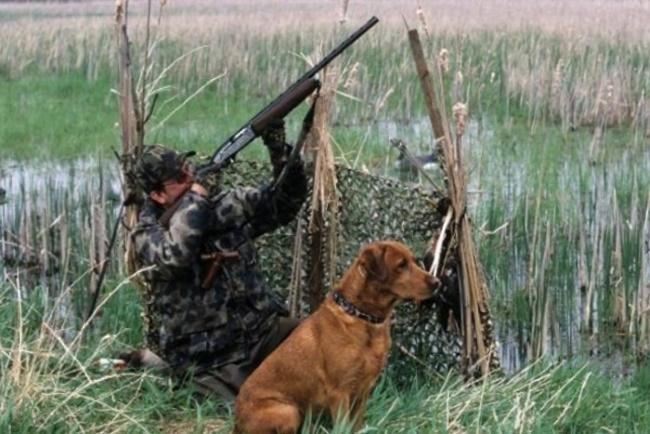 Охота, охотник, животные, лимит, расселение