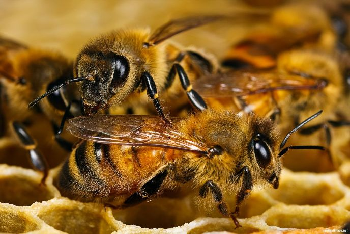Во Франции в автокатастрофе погибло миллион пчел