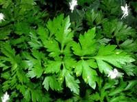 Мини-бизнес: выращивание зелени