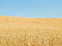 Удобрения: типы, назначение, способы применения