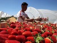Польша планирует ввести налог на работников из Украины