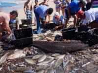 Португальским рыбакам угрожает 15-летний рыболовный запрет