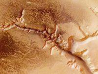 Поверхностный грунт Марса токсичен для всех видов растений, – ученые