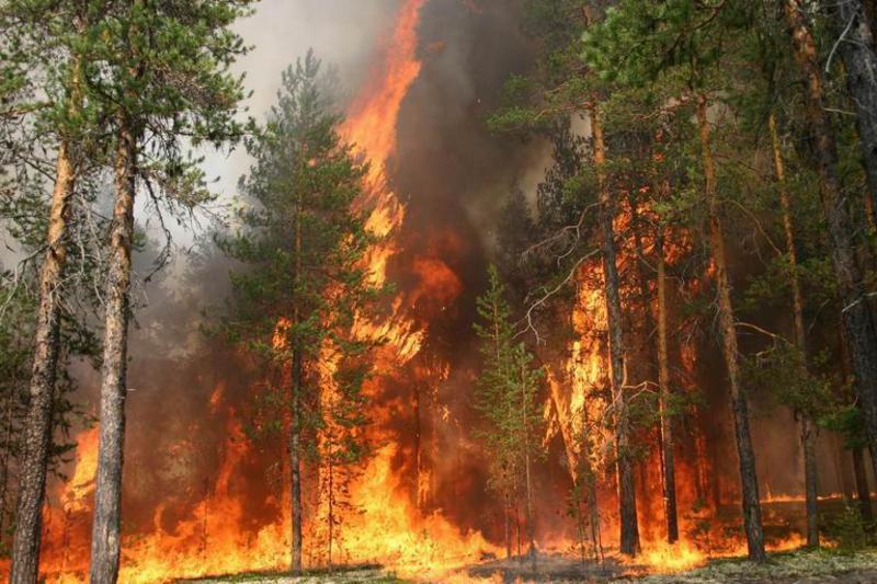 Что останется после пожаров в Забайкалье?