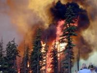 Подросток стал причиной возгорания лесов в Забайкалье