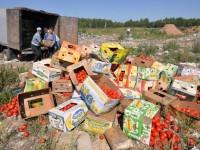В России уничтожили 2,5 тысячи тонн санкционных продуктов – Россельхознадзор