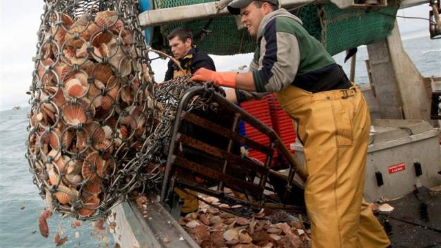Рыбакам Франции могут запретить ловлю гребешка из-заBrexit