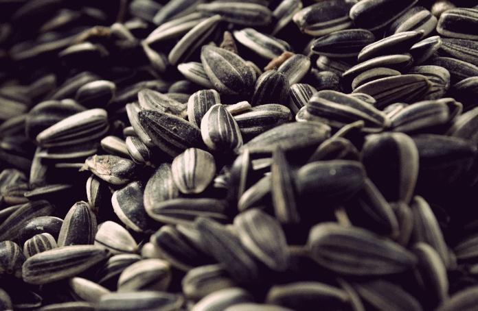 Какая польза от семян подсолнечника для организма человека