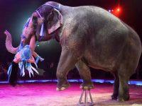 Шотландия запретила использование диких животных в передвижных цирках